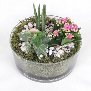 mini ogródek kaktus kalanchoe