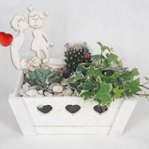 mini ogródek w skrzynce