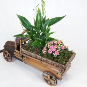 mini ogródek samochód